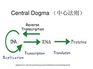 Central Dogma  (中心法则)