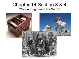 "Chapter 14 Section 3 & 4 ""Cotton Kingdom in the South"""