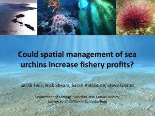 Could spatial management of sea urchins increase fishery profits?