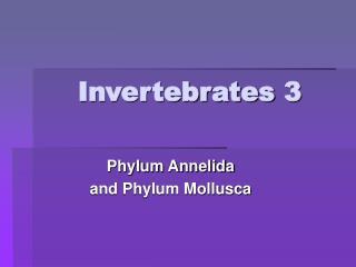 Invertebrates 3