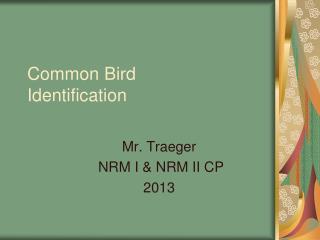 Common Bird Identification