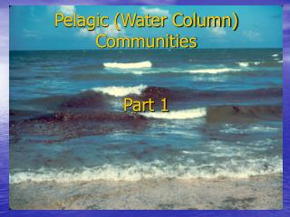 Pelagic (Water Column) Communities Part 1
