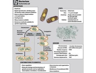 Tema 5.  Replicaci�n