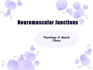 Neuromuscular Junctions