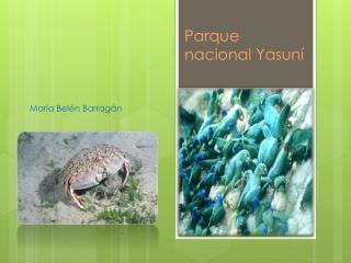Parque nacional Yasun�