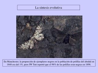 La síntesis evolutiva