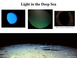 Light in the Deep Sea