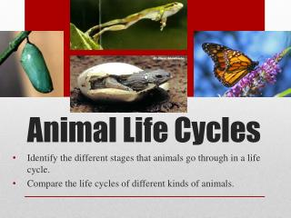 Animal Life Cycles
