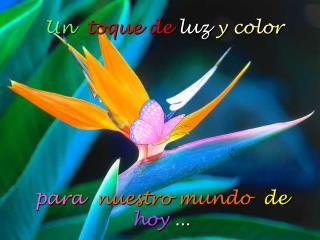 Un toque de  luz  y  color para nuestro  mundo   de hoy ...