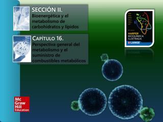 Secci�n II.  Bioenerg�tica y el metabolismo de carbohidratos y l�pidos