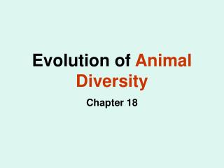 Evolution of  Animal Diversity