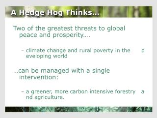 A Hedge Hog Thinks…