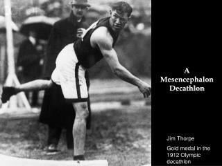 A Mesencephalon Decathlon