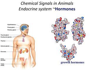 Chemical  Signals in Animals Endocrine system ~ Hormones