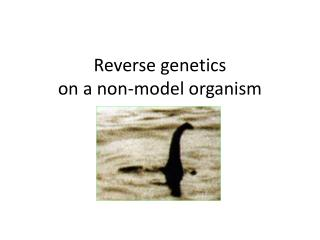 Reverse genetics  on a non-model organism