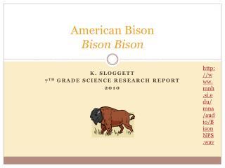 American Bison Bison Bison