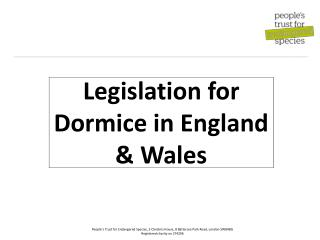Legislation for Dormice in England &  Wales