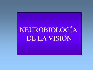NEUROBIOLOGÍA  DE LA VISIÓN