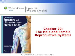 Chapter 20: The Male and Female Reproductive Systems