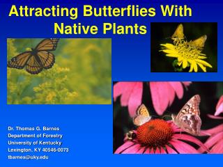 Attracting Butterflies With Native Plants