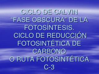 UBICACIÓN DEL CICLO DE CALVIN  (Salisbury & Ross, 2000)