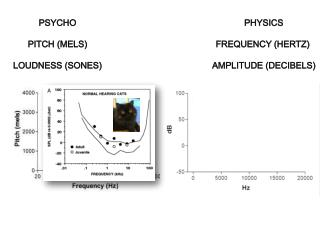 PHYSICS Frequency (Hertz)  Amplitude (Decibels)