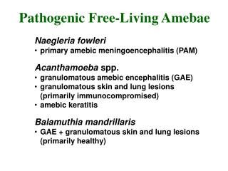 Naegleria fowleri primary amebic meningoencephalitis (PAM) Acanthamoeba  spp.
