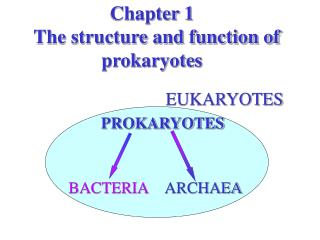 Chapter 1   The structure and function of prokaryotes