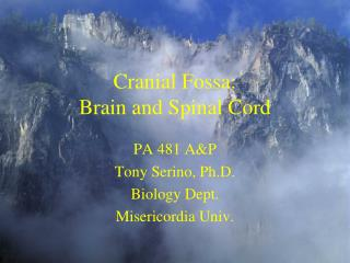 Cranial Fossa: Brain and Spinal Cord