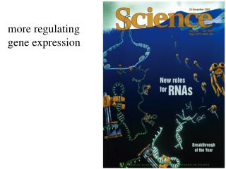 more regulating gene expression