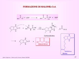 FORMAZIONE DI MALONIL-CoA