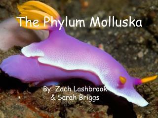 The Phylum Molluska