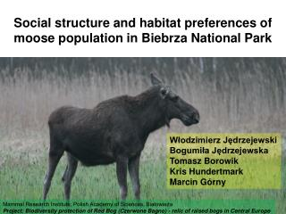 Social structure and habitat preferences of moose population in Biebrza National Park