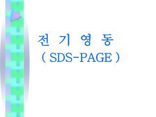 전  기  영  동 ( SDS-PAGE )