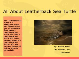 All About Leatherback Sea Turtle