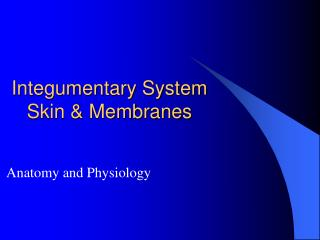 Integumentary System Skin & Membranes