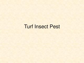 Turf Insect Pest