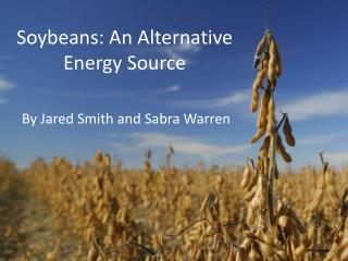 Soybeans: An Alternative Energy Source