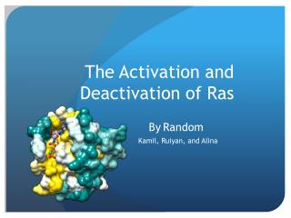 The Activation and Deactivation of Ras