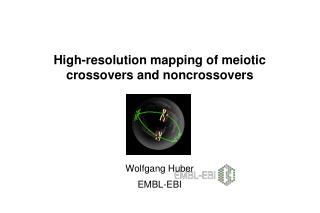High-resolution mapping of meiotic crossovers and noncrossovers