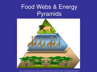 Food Webs & Energy Pyramids