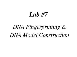 Lab #7