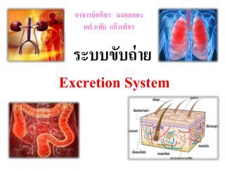 ระบบขับถ่าย  Excretion System