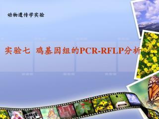 实验七 鸡基因组的 PCR-RFLP 分析