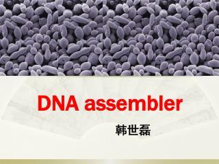 DNA assembler