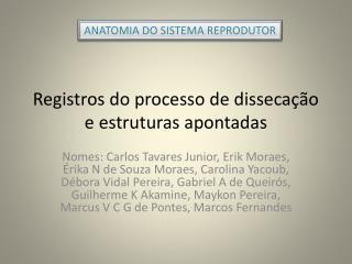 Registros do processo de dissecação e estruturas apontadas