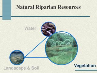 Ppt soil and natural vegetation powerpoint presentation for Soil resources wikipedia
