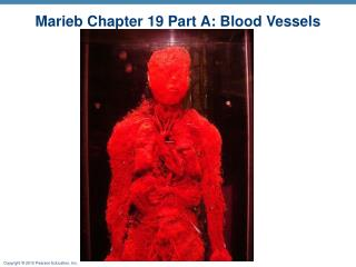 Marieb Chapter 19 Part A: Blood Vessels