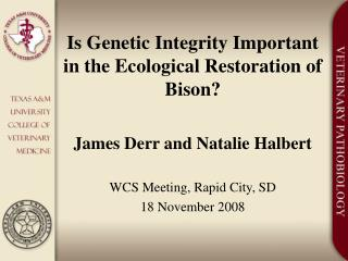 Is Genetic Integrity Important in the Ecological Restoration of Bison?