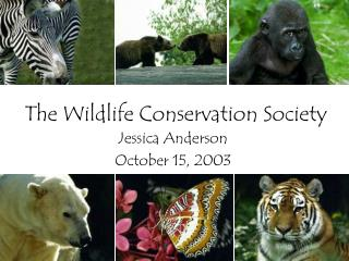 The Wildlife Conservation Society
